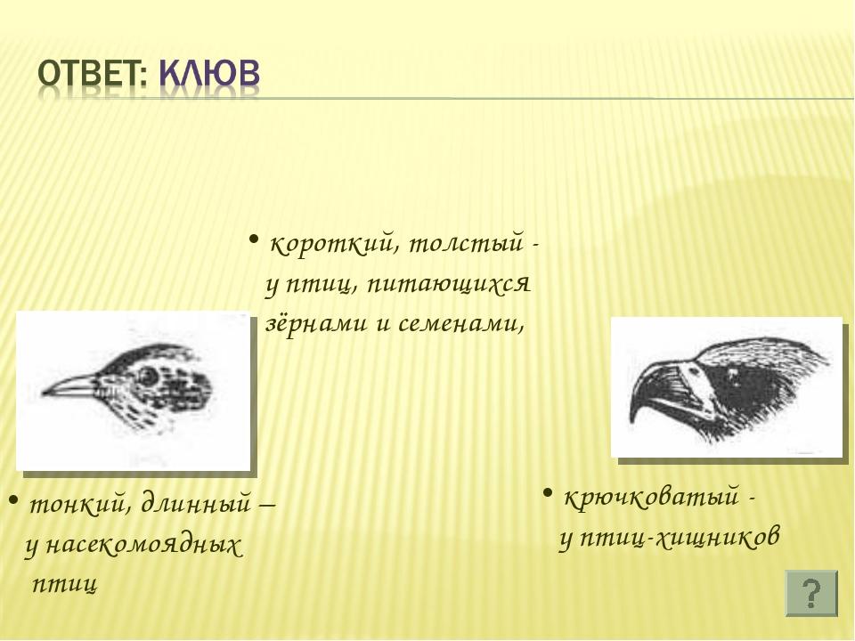 короткий, толстый - у птиц, питающихся зёрнами и семенами, тонкий, длинный –...