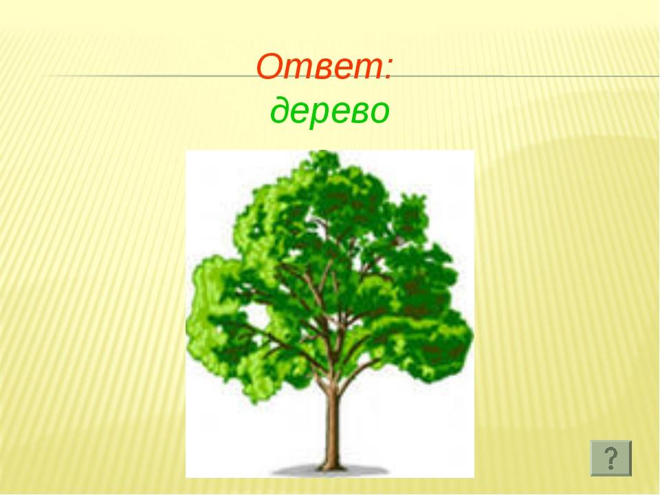 Ответ: дерево