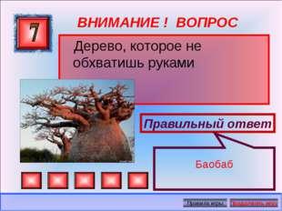 ВНИМАНИЕ ! ВОПРОС Дерево, которое не обхватишь руками Правильный ответ Баобаб