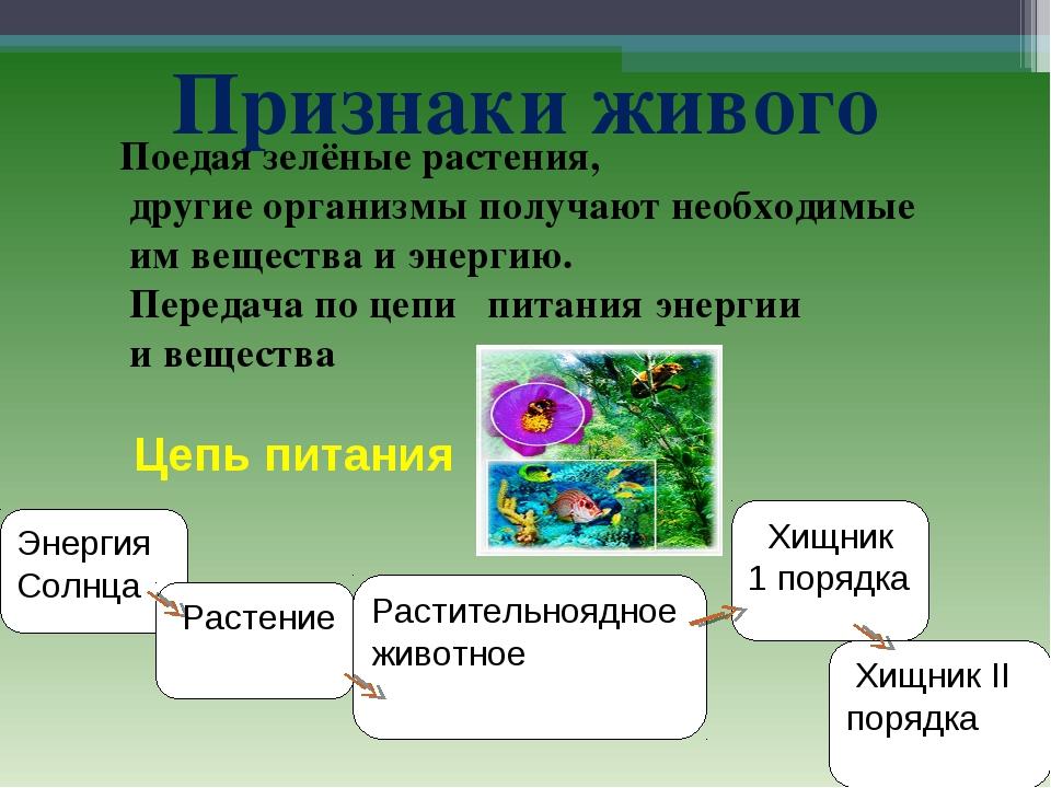 Признаки живого Энергия Солнца Растение Растительноядное животное Хищник 1 по...