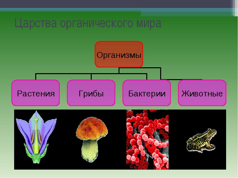 Царства органического мира