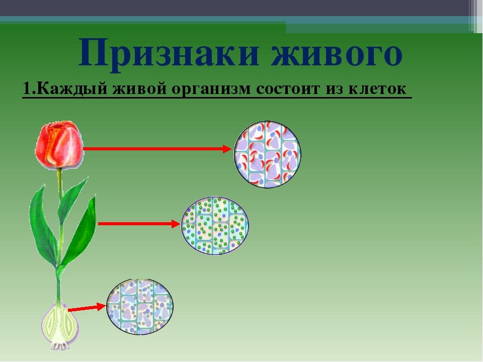 Признаки живого 1.Каждый живой организм состоит из клеток