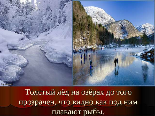 Толстый лёд на озёрах до того прозрачен, что видно как под ним плавают рыбы.
