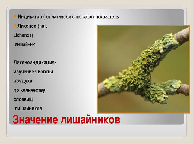 Значение лишайников Индикатор-( от латинского indicator)-показатель Лихенос-(...