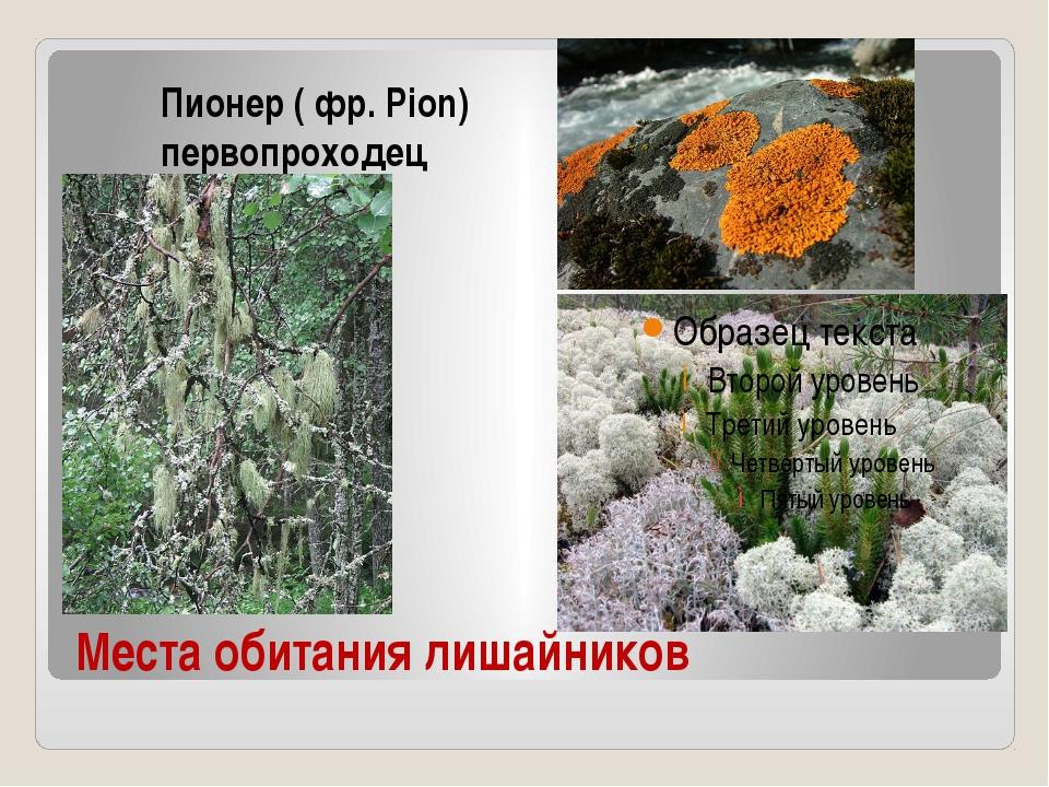 Места обитания лишайников Пионер ( фр. Pion) первопроходец