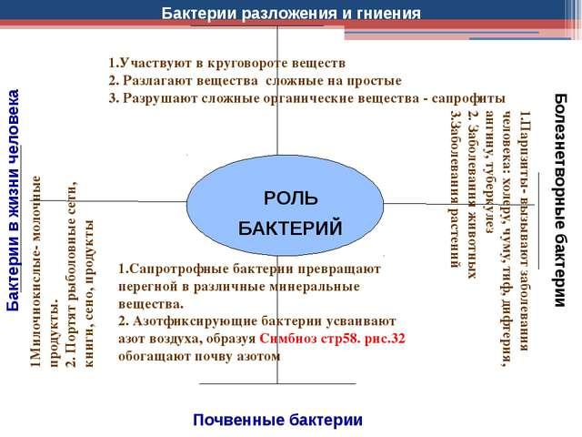 РОЛЬ БАКТЕРИЙ Почвенные бактерии Бактерии в жизни человека Болезнетворные ба...