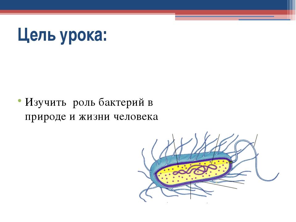 Цель урока: Изучить роль бактерий в природе и жизни человека