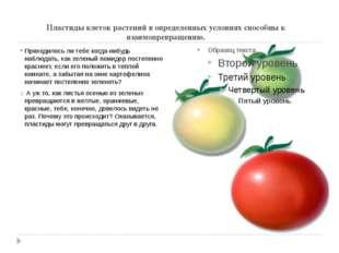Пластиды клеток растений в определенных условиях способны к взаимопревращению
