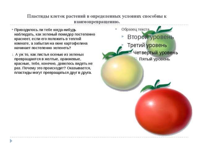 Пластиды клеток растений в определенных условиях способны к взаимопревращению...