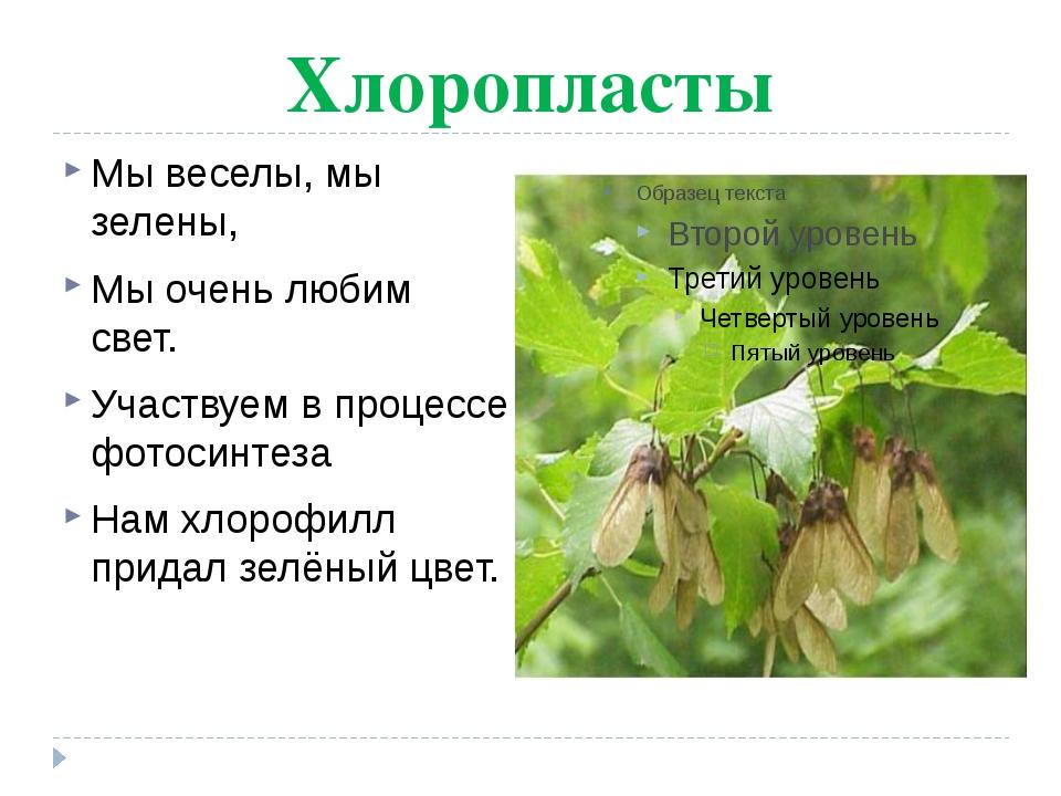 Хлоропласты Мы веселы, мы зелены, Мы очень любим свет. Участвуем в процессе ф...