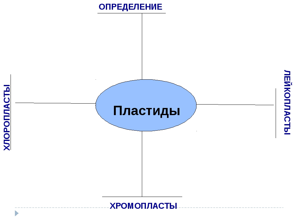 Пластиды ХРОМОПЛАСТЫ ХЛОРОПЛАСТЫ ЛЕЙКОПЛАСТЫ ОПРЕДЕЛЕНИЕ