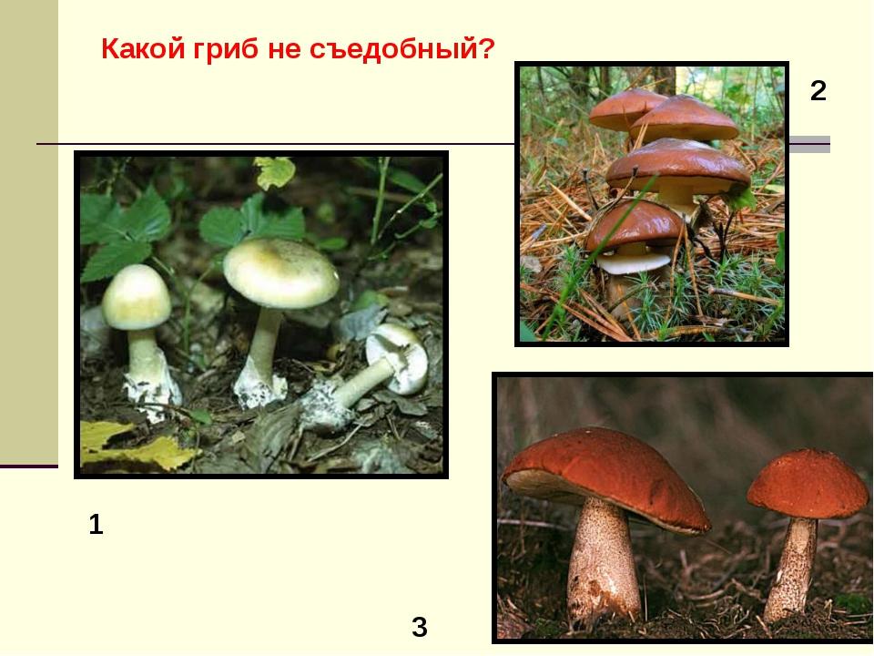 1 2 3 Какой гриб не съедобный?