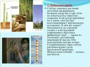 6. Фабричные трубы Стебли злаковых растений способны выдерживать большие нагр