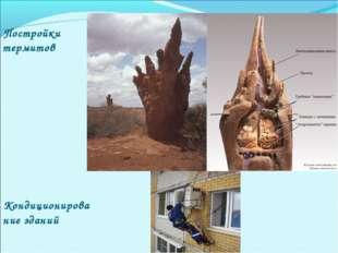 Постройки термитов Кондиционирование зданий