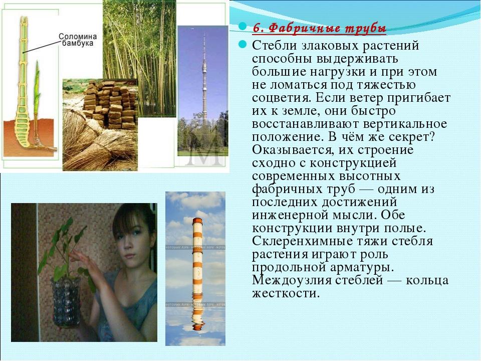 6. Фабричные трубы Стебли злаковых растений способны выдерживать большие нагр...