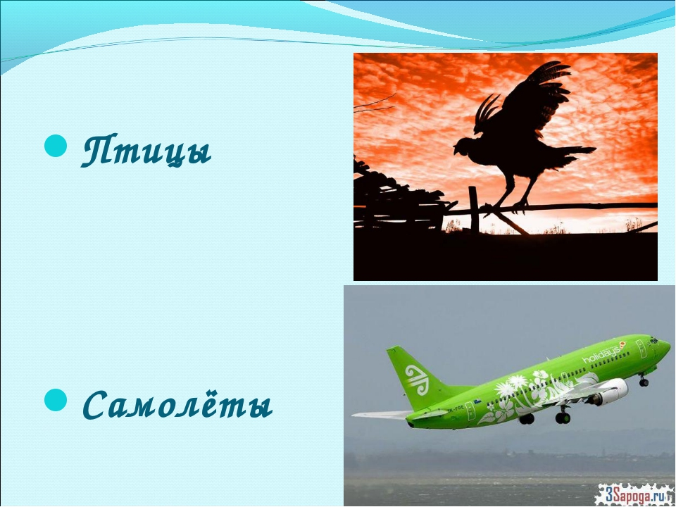 Птицы Самолёты