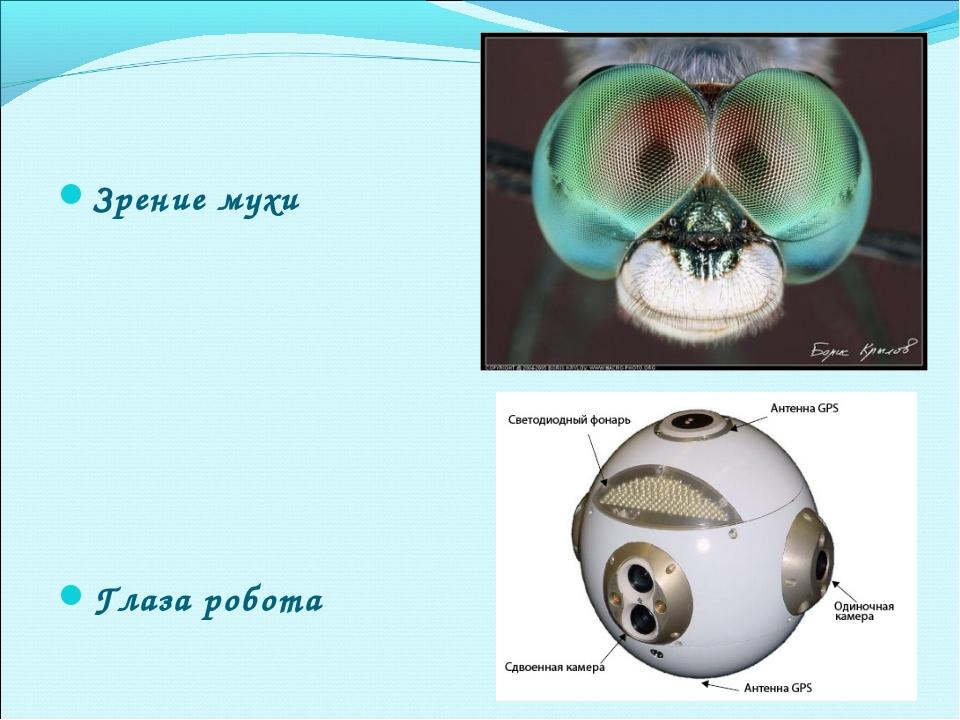 Зрение мухи Глаза робота