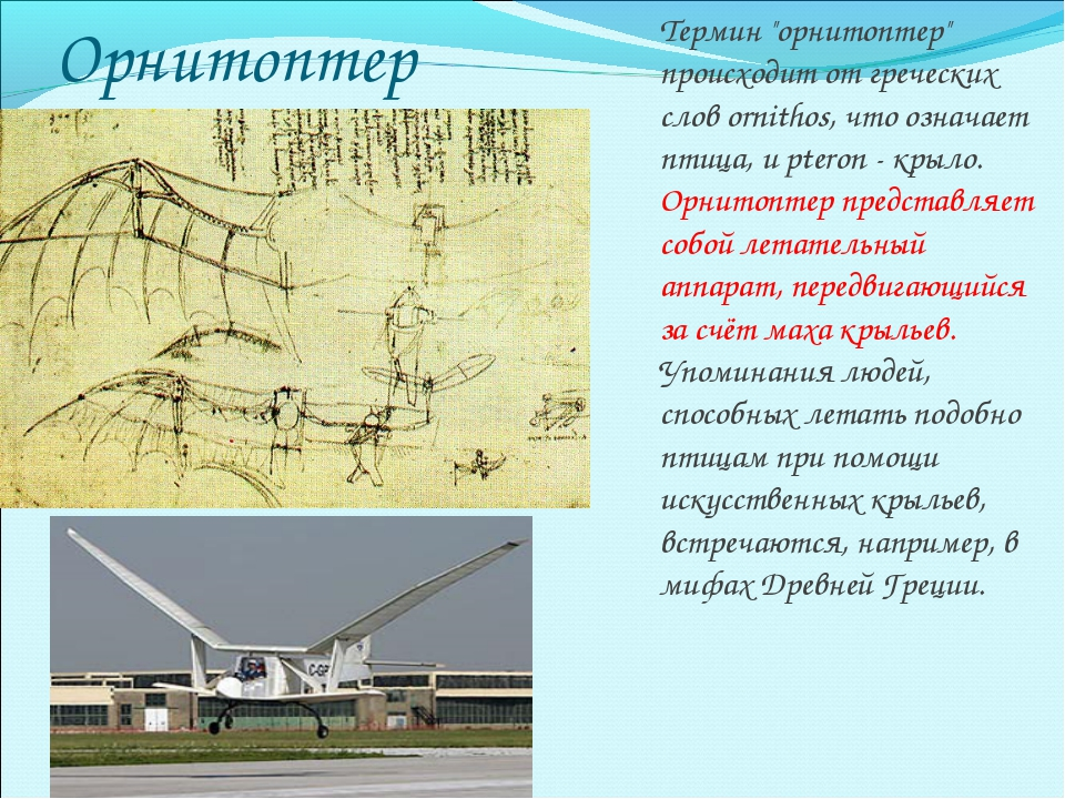 """Орнитоптер Термин """"орнитоптер"""" происходит от греческих слов ornithos, что озн..."""