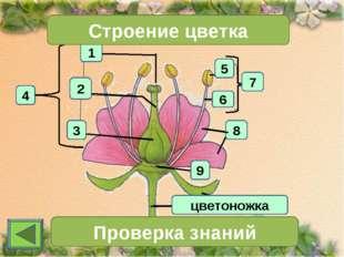 1 4 2 3 Строение цветка 7 Проверка знаний 11 цветоножка 6 5 8 9