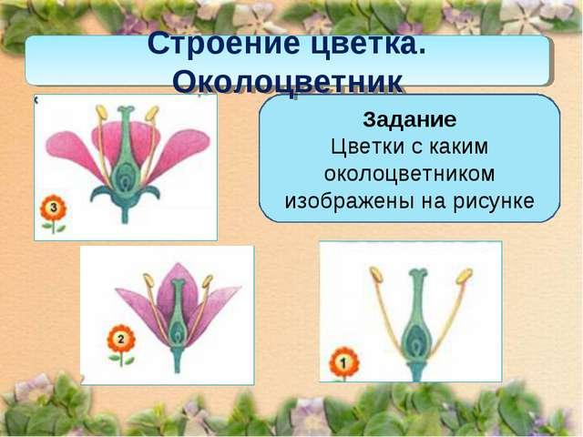 Задание Цветки с каким околоцветником изображены на рисунке Строение цветка....