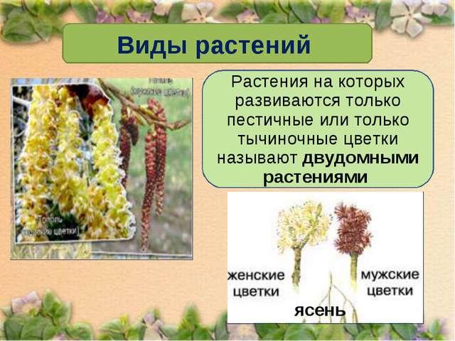 Виды растений Растения на которых развиваются только пестичные или только тыч...
