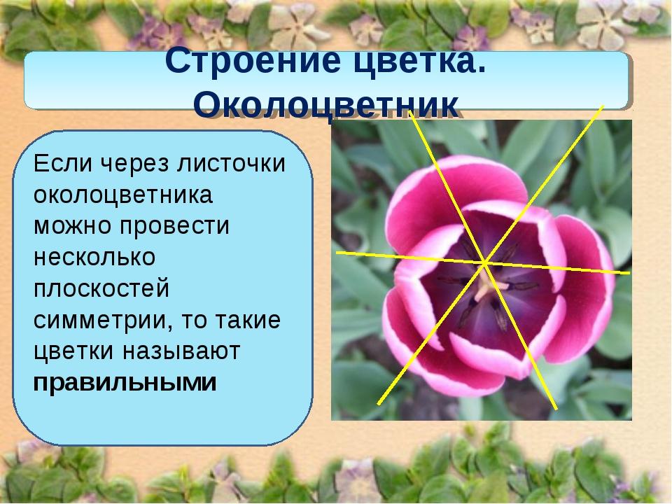 Строение цветка. Околоцветник Если через листочки околоцветника можно провест...