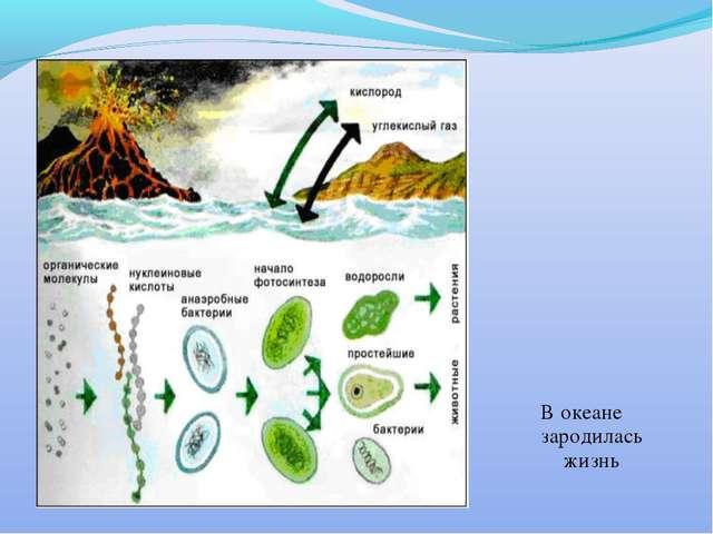 В океане зародилась жизнь
