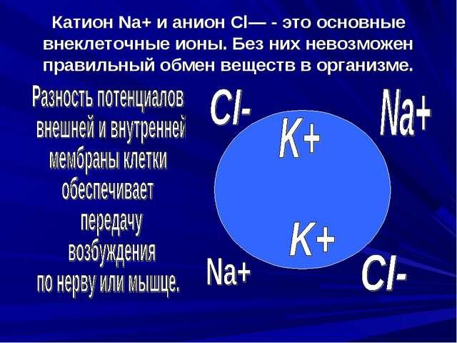 Катион Na+ и анион Cl— - это основные внеклеточные ионы. Без них невозможен п...