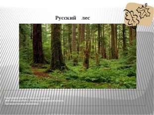 Русский лес Подготовила учитель начальных классов МОУ «Гимназия №8» г. Энгел