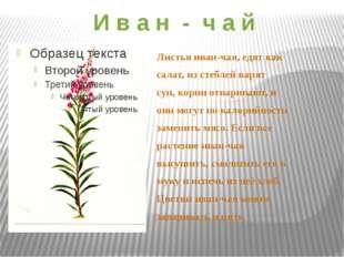 И в а н - ч а й Листья иван-чая, едят как салат, из стеблей варят суп, корни