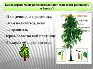 Какое дерево чаще всего вспоминают если хотят рассказать о России? И не девиц