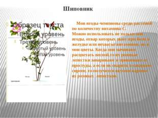 Шиповник Мои ягоды-чемпионы среди растений по количеству витамина С. Можно ис