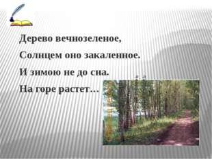 Дерево вечнозеленое, Солнцем оно закаленное. И зимою не до сна. На горе раст