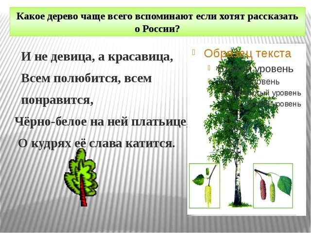 Какое дерево чаще всего вспоминают если хотят рассказать о России? И не девиц...