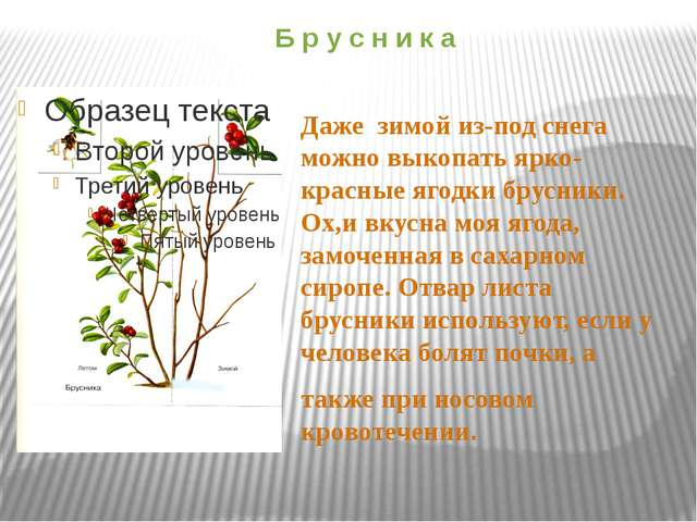 Б р у с н и к а Даже зимой из-под снега можно выкопать ярко-красные ягодки бр...