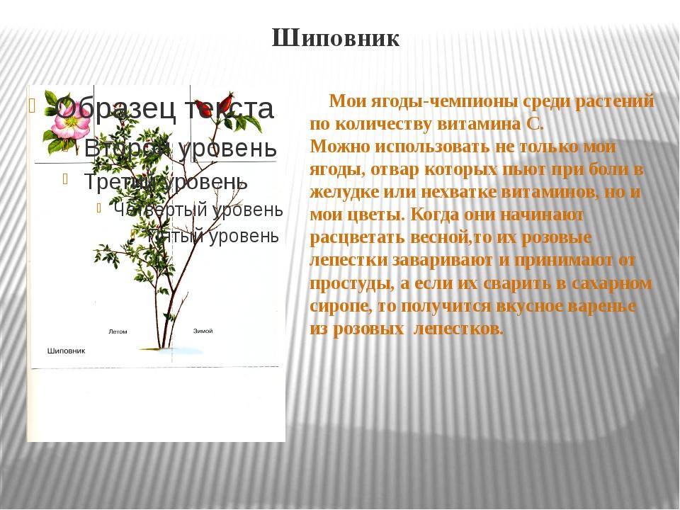 Шиповник Мои ягоды-чемпионы среди растений по количеству витамина С. Можно ис...