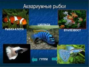 Аквариумные рыбки ГУППИ ВУАЛЕХВОСТ ЦИХЛИДА РЫБКА-КЛОУН