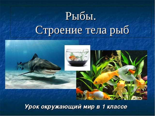Рыбы. Строение тела рыб Урок окружающий мир в 1 классе