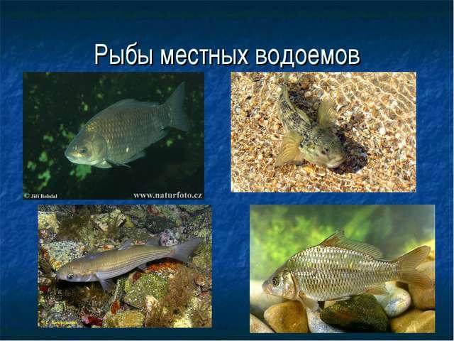 Рыбы местных водоемов