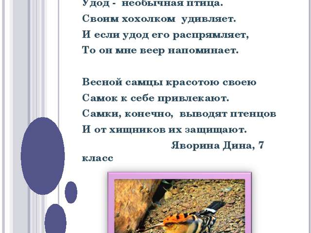 КОНКУРС НА ЛУЧШЕЕ СТИХОТВОРЕНИЕ  Удод - необычная птица. Своим хохолком удив...