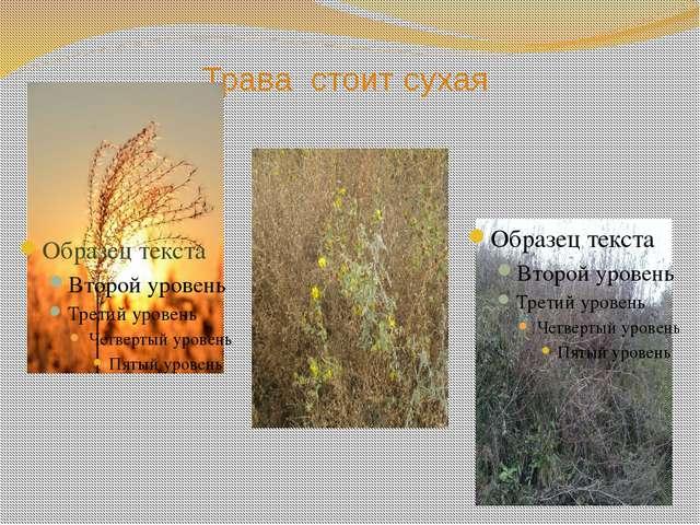 Трава стоит сухая