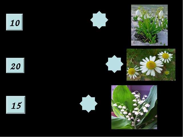 10 20 15 Из под снега расцветает, Раньше всех весну встречает. У реки стоят с...