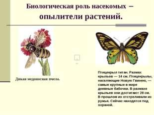 Биологическая роль насекомых – опылители растений. Птицекрыл титан. Размах кр