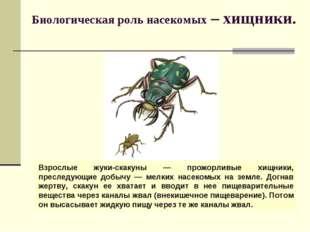 Биологическая роль насекомых – хищники. Взрослые жуки-скакуны — прожорливые х