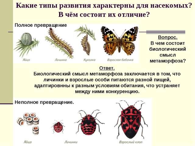 Какие типы развития характерны для насекомых? В чём состоит их отличие? Вопро...
