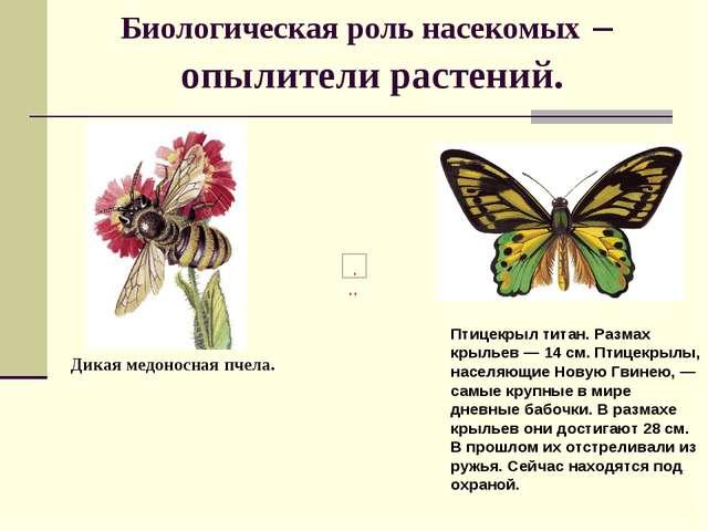 Биологическая роль насекомых – опылители растений. Птицекрыл титан. Размах кр...
