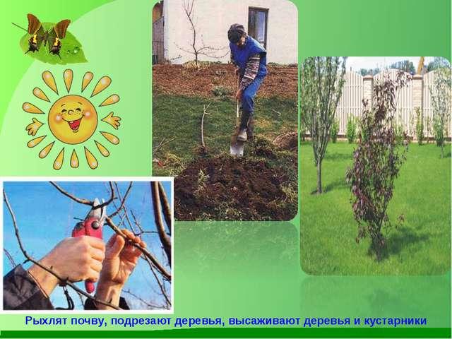 Рыхлят почву, подрезают деревья, высаживают деревья и кустарники