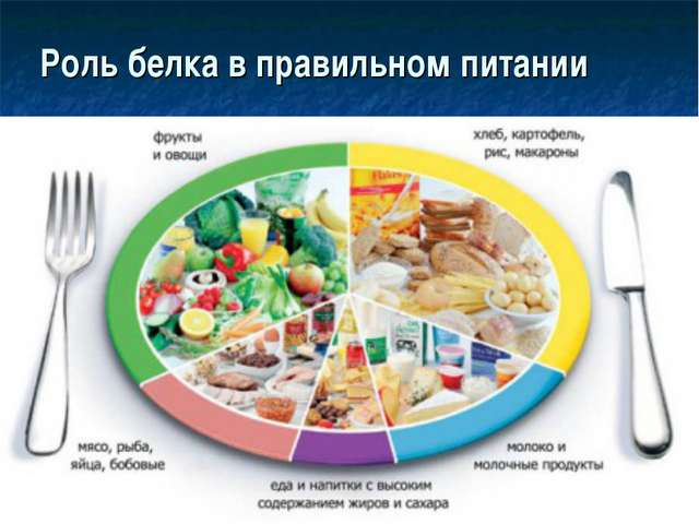 Роль белка в правильном питании