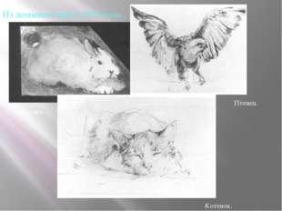Из домашних работ 1956 года . Птенец. Кролик. Котенок.