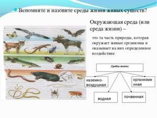 Вспомните и назовите среды жизни живых существ? Окружающая среда (или среда ж